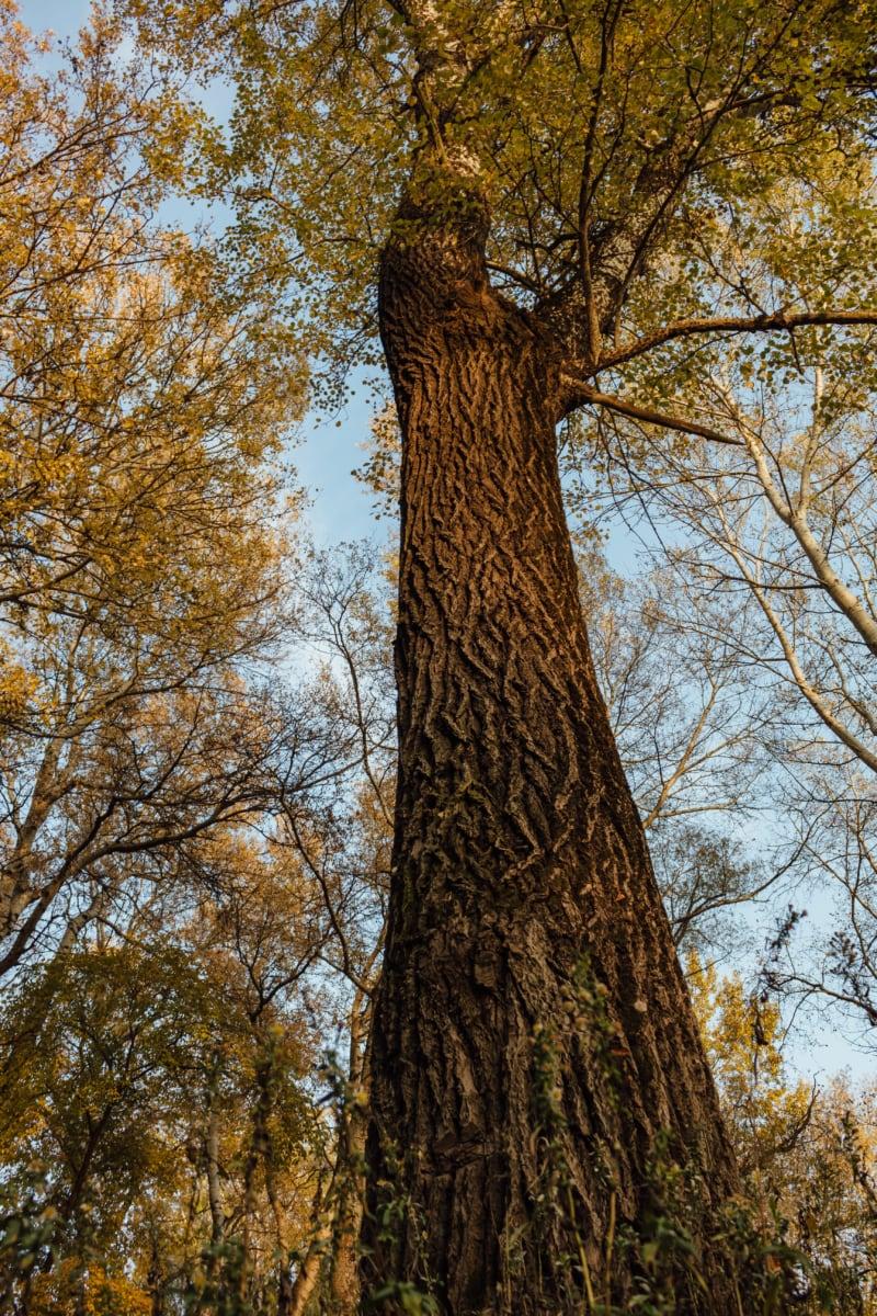 tall, tree, bark, trees, wood, leaf, forest, nature, park, landscape