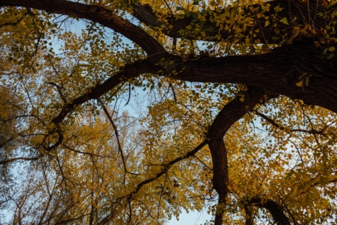 drzewo, sezon jesień, wysoki, oddziały, żółty, park, jesień, sezon, lasu, liść