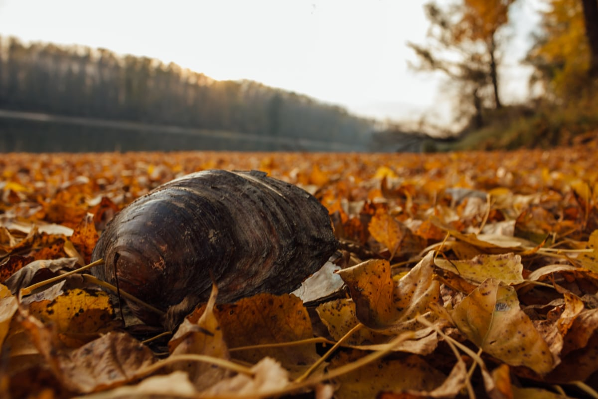 dry season, yellow leaves, mussel, shell, autumn season, nature, leaf, outdoors, flame, tree