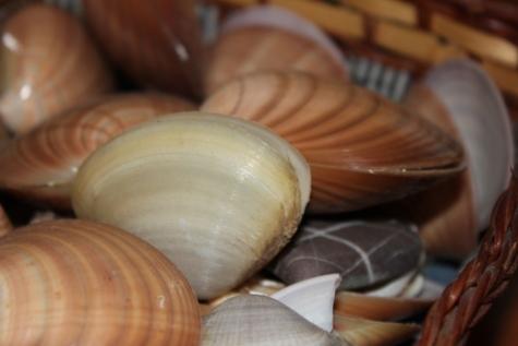 mussel, still life, shell, wicker basket, mollusk, invertebrate, handmade, indoors, brown, upclose