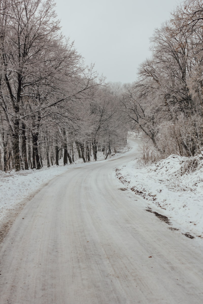 downhill, slope, forest road, winter, road, weather, landscape, cold, fog, frost