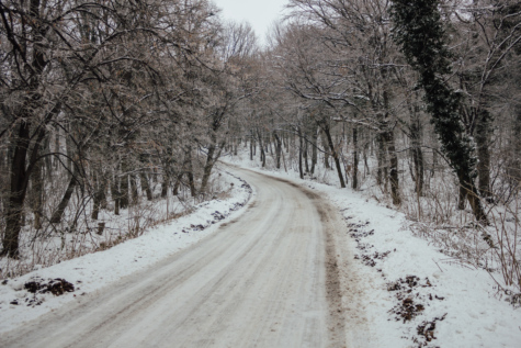 road, forest road, winter, tree, cold, forest, trees, weather, snow, frost
