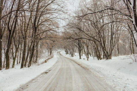 forest road, frost, snowy, winter, snow, weather, wood, cold, season, ice