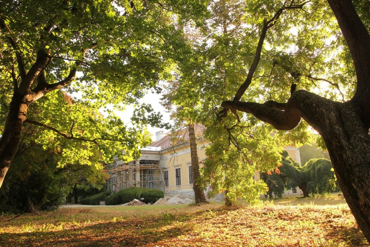 castle, restoration, garden, facade, monument, leaves, forest, park, landscape, plant