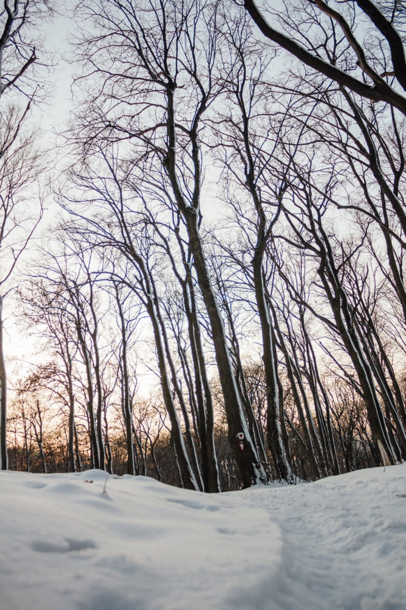 forest trail, snowy, winter, branches, ice, frost, weather, snow, tree, landscape