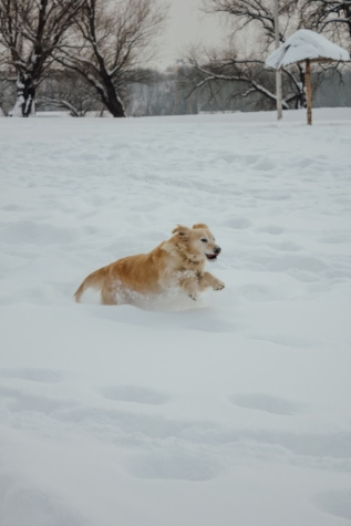 snowy, running, dogs, jumping, pet, canine, ice, cold, dog, snow