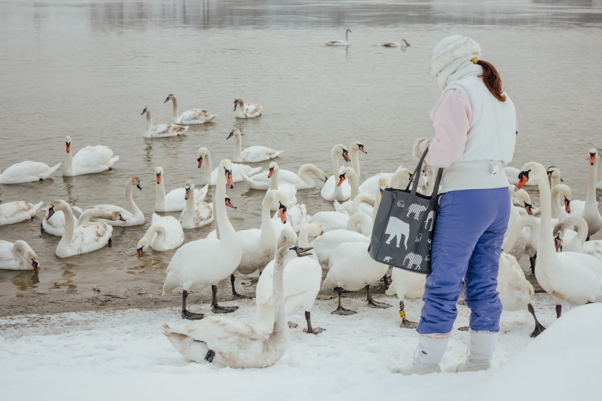 Schwan, Winter, Wildnis, Flussufer, Mädchen, Vogel, Menschen, Schnee, Wasser, Eis