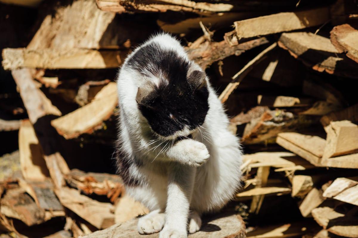 black and white, domestic cat, firewood, wildlife, wild, fur, cute, pet, furry, domestic