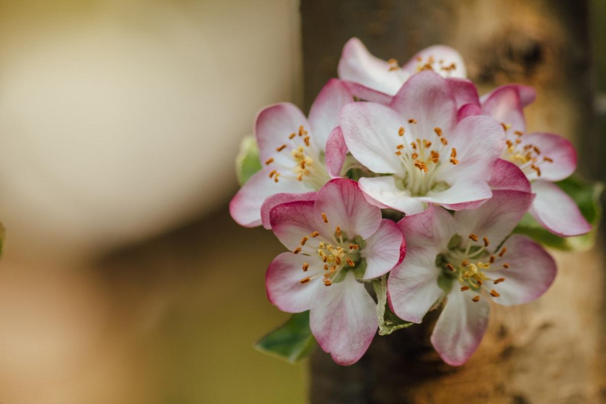 spring time, pistil, blurry, branch, close-up, flowers, spring, plant, blossom, petal