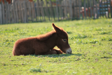 offspring, pony, laying, horse, animal, dog, grass, canine, nature, cute