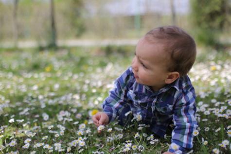 아기, 데이지, 아이, 초원, 잔디, 유아, 크롤링, 아들, 소년, 귀여운