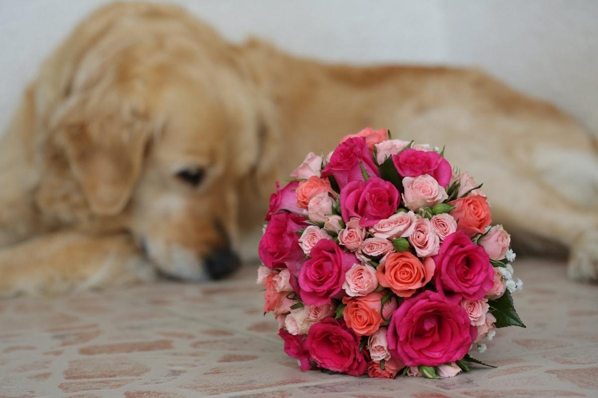 anjing, buket pernikahan, romantis, karangan bunga, mawar, bunga, dekorasi, pengaturan, merah muda, naik