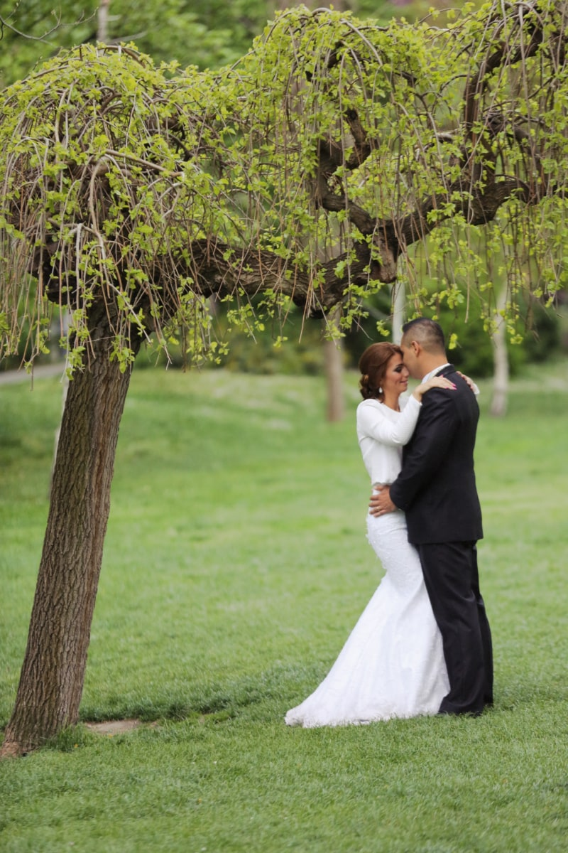 groom, bride, tree, park, wedding, outdoors, couple, dress, happy, love