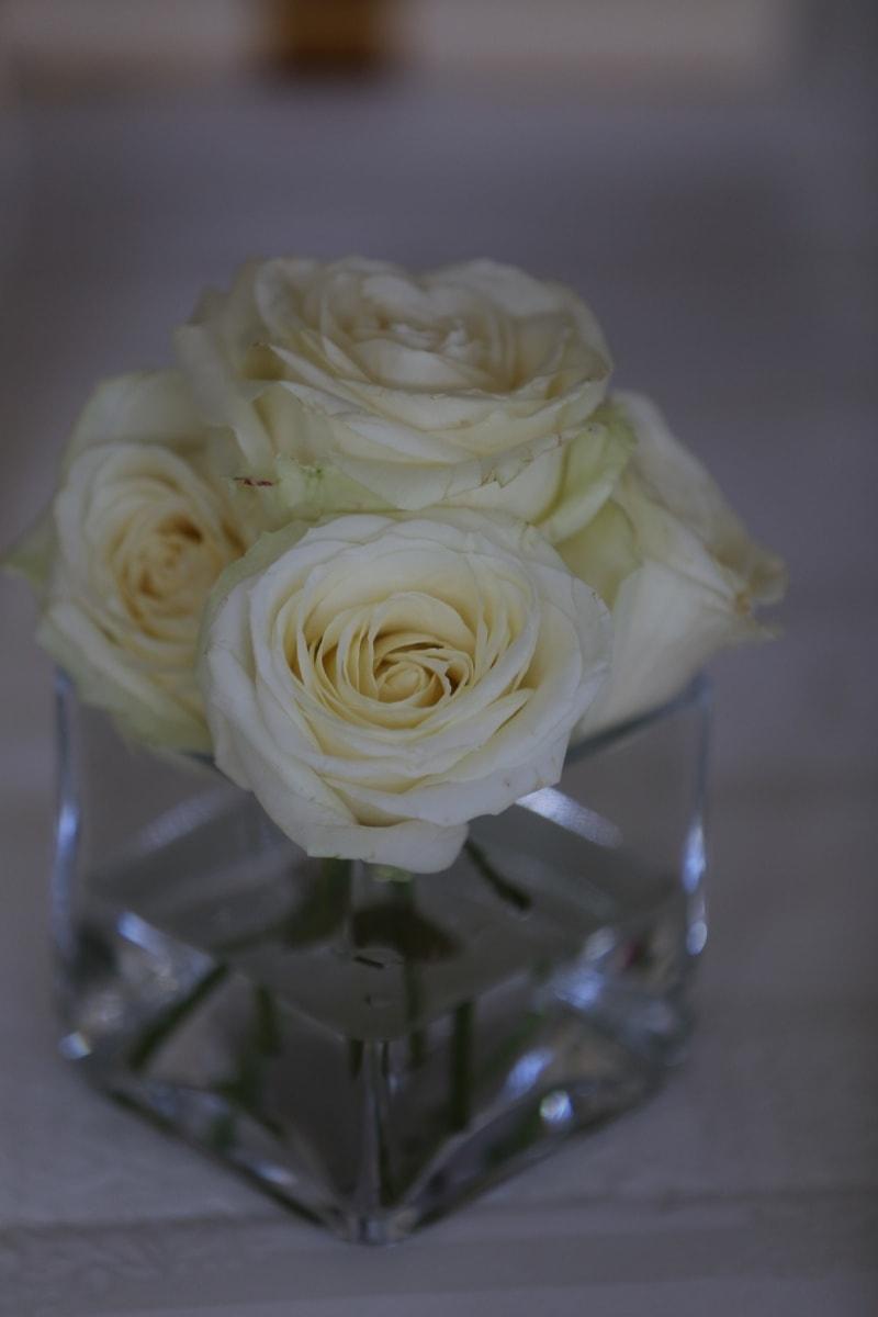 white flower, roses, vase, elegance, glass, romance, flower, rose, petal, bouquet