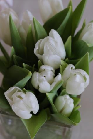 tulipani, bijeli cvijet, zeleno lišće, buket, proljeće, list, lala, cvijet, biljka, cvijet