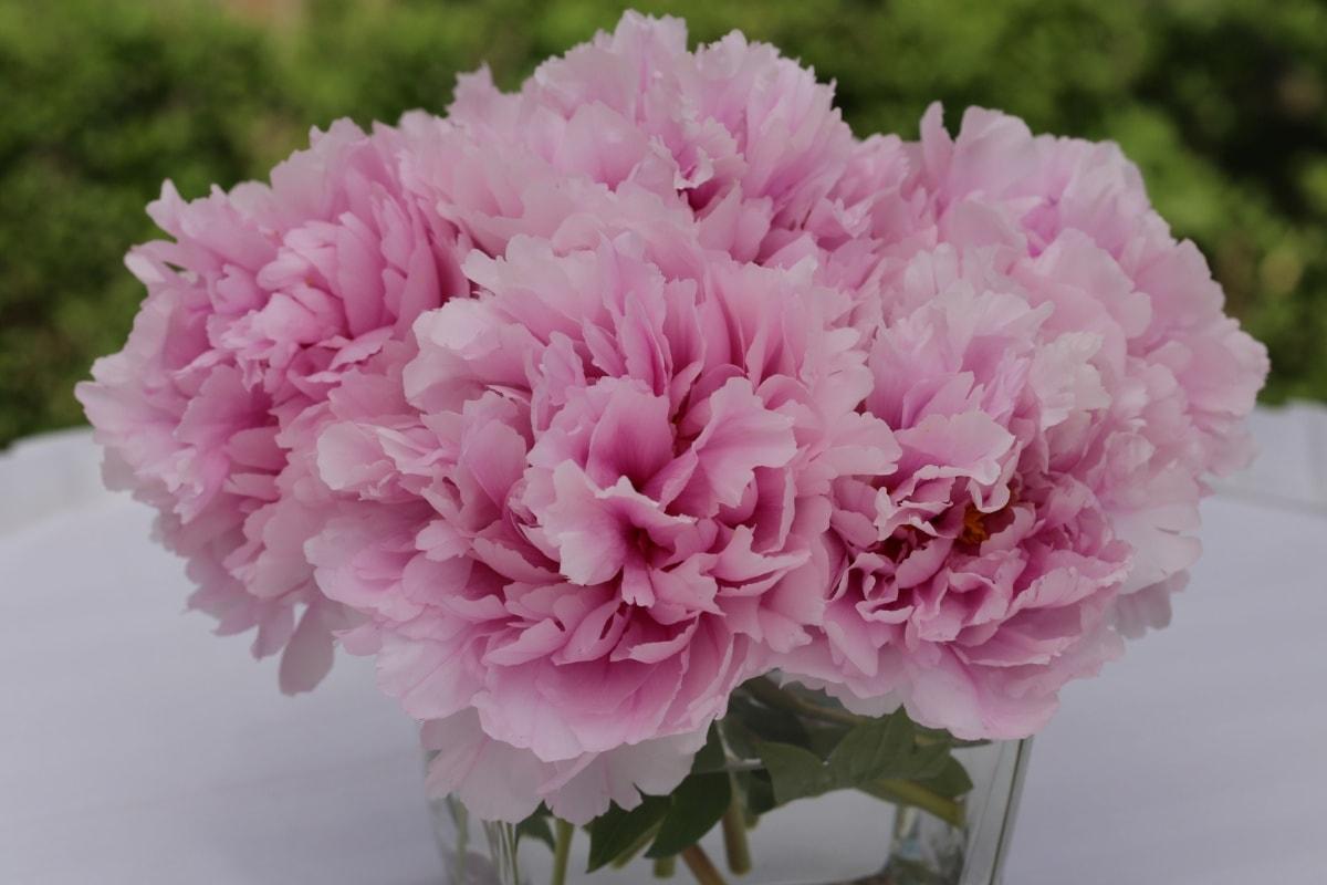 elegant, vase, pinkish, carnation, petal, flowers, flora, hyacinth, flower, plant