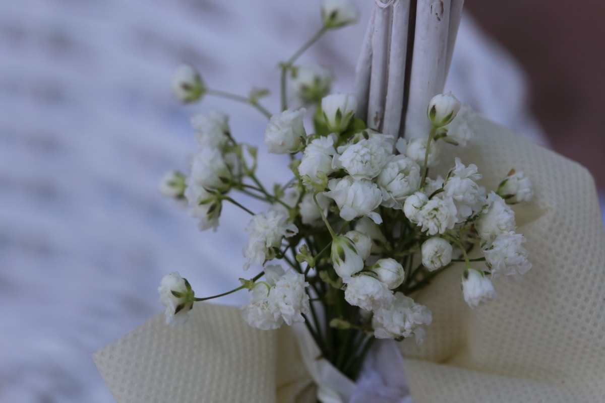 white flower, still life, bouquet, tablecloth, silk, wedding, flower, flowers, romance, vase
