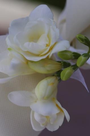Silk, ökade, vit blomma, blomknopp, arrangemang, detalj, eleganta, gren, buske, blommor