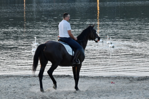 beach, horse, lake, swan, man, rider, horseback, stallion, cavalry, trainer