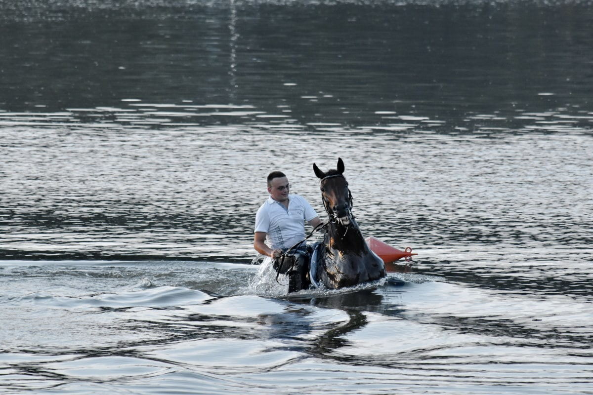 swimming, horse, underwater, riding, man, water, river, sport, people, motion