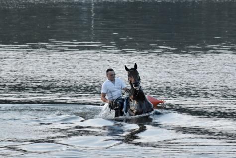 plavání, kůň, pod vodou, jízda na koni, muž, voda, řeka, Sportovní, lidé, pohyb