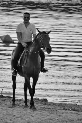 beach, horse, lake, cowboy, horseback, animal, stallion, cavalry, man, competition