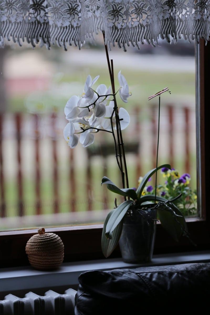 fleur blanche, Orchid, fenêtre, pot de fleurs, rideau, Design d'intérieur, canapé, plante, filon-couche, verre