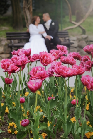 garden, tulips, romantic, bride, groom, spring, pink, flower, plant, bloom
