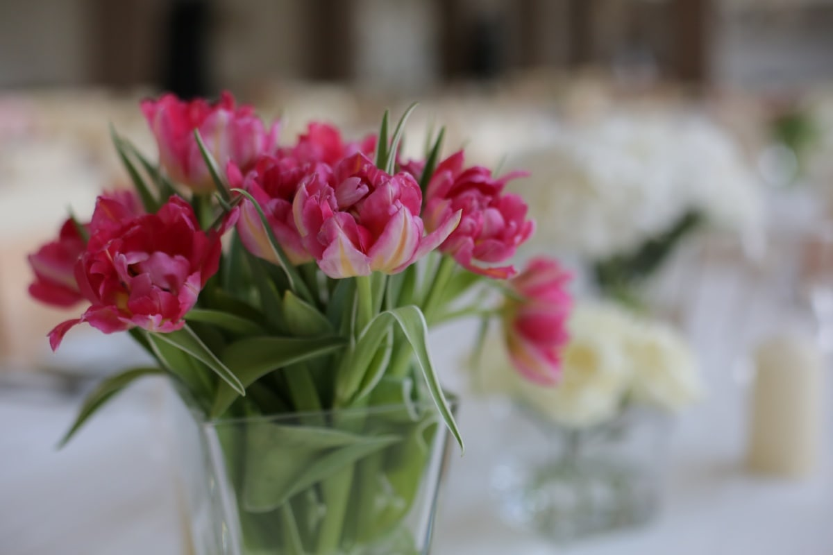 vase, crystal, tulips, lunchroom, table, dining area, flowers, blossom, bouquet, flower