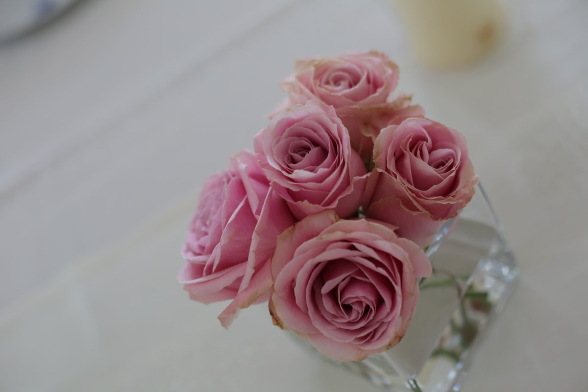 roses, pinkish, water, vase, tablecloth, table, flower, love, decoration, romance
