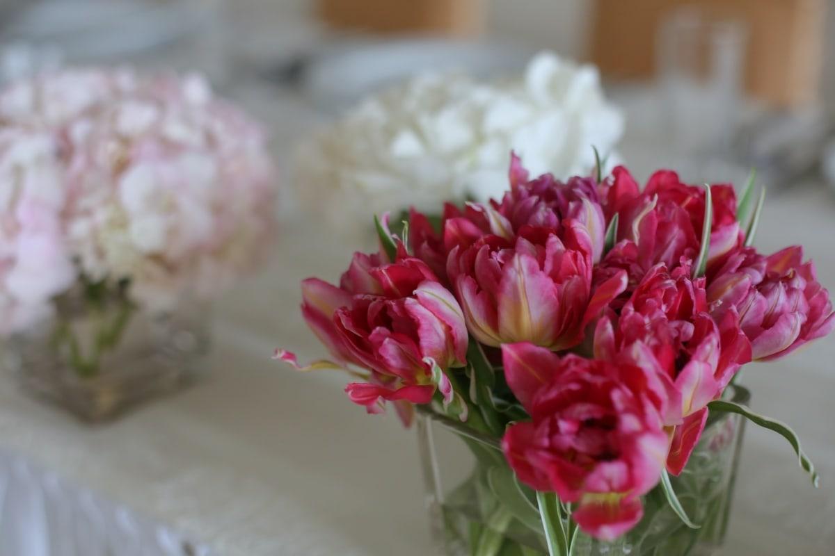 tulipani, crvenkasto, vaza, staklo, cvijet, roza, vjenčanje, proljeće, biljka, cvijeće