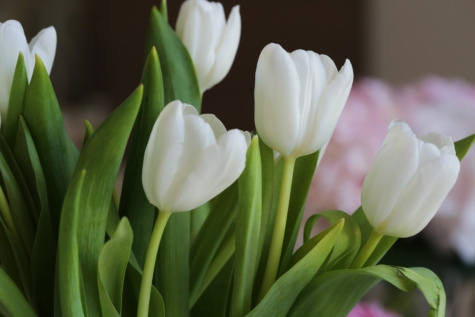 bouquet, tulips, white flower, arrangement, spring, leaf, tulip, plant, flower, nature