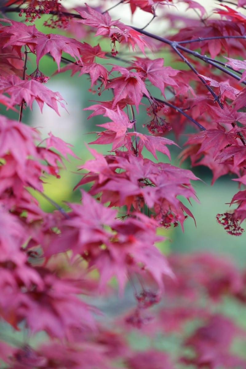 spring, shrub, flowers, leaf, pink, plant, nature, flower, bright, flora