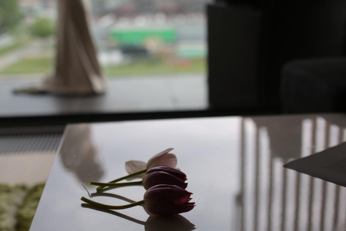 tulips, three, interior decoration, flowers, reflection, shadow, table, elegant, petals, apartment