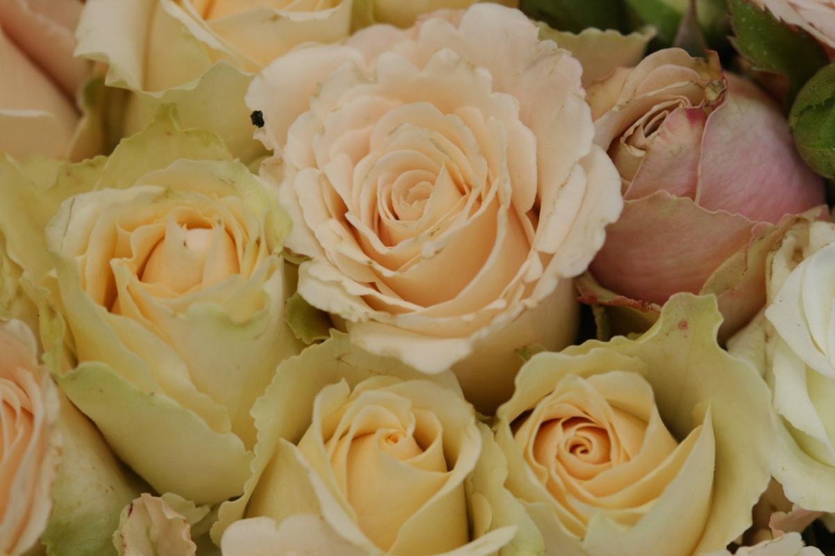 close-up, white flower, wedding bouquet, roses, love, arrangement, wedding, rose, flower, decoration
