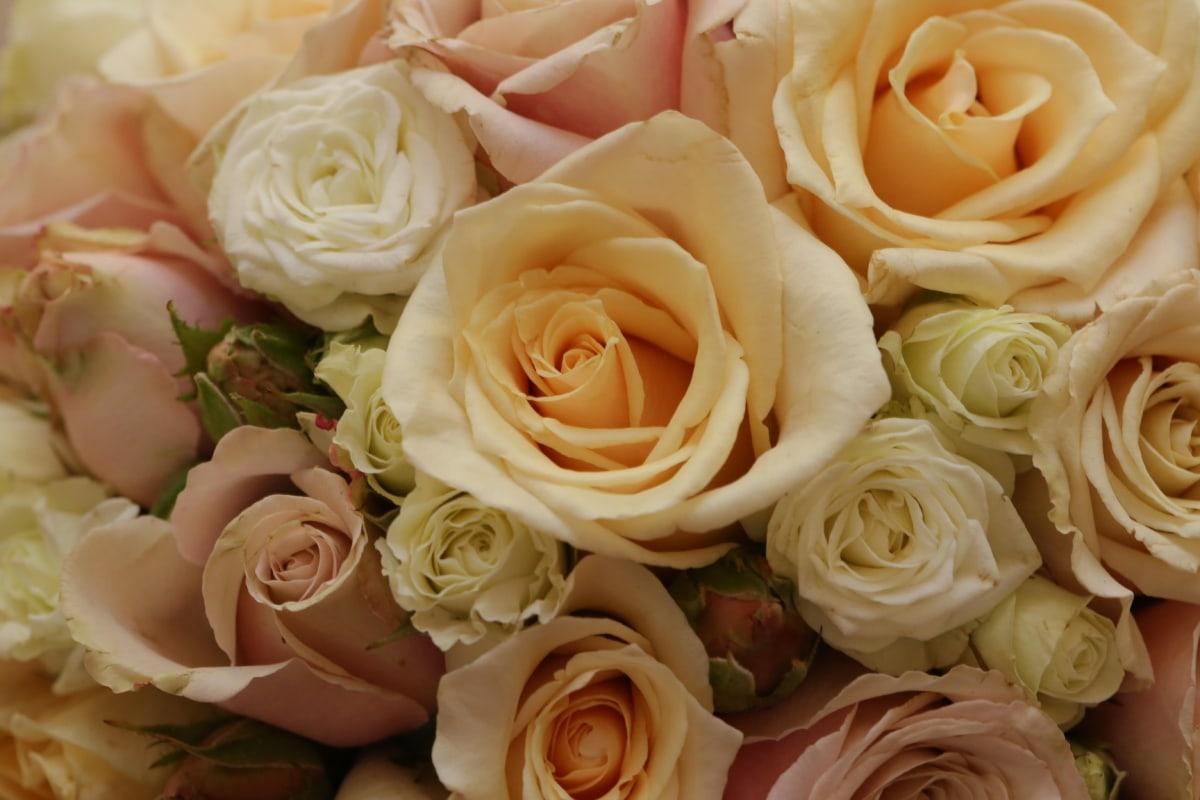 bouquet, fleur blanche, des roses, romance, Rose, fleur, pétale, romantique, pastel, engagement