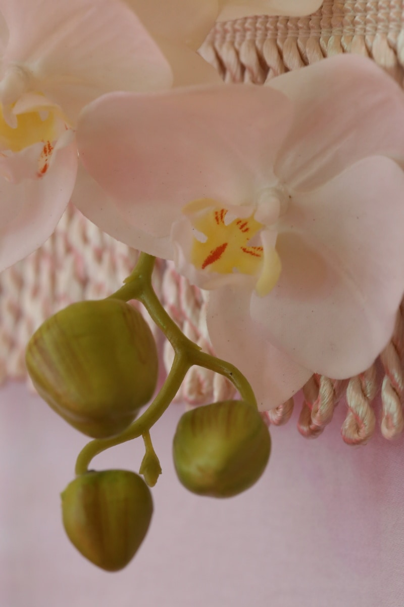 orchid, white flower, close-up, pistil, nature, plant, flower, tropical, flora, exotic