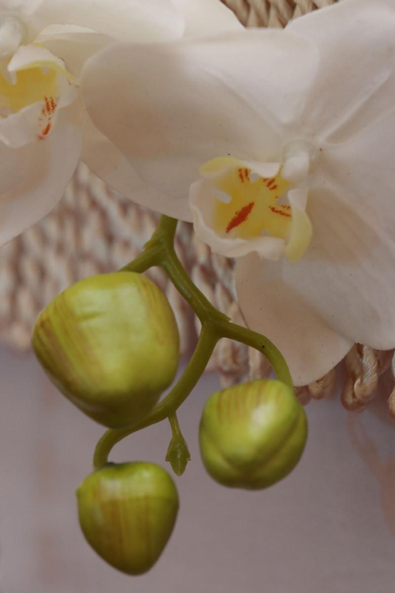 petals, orchid, white flower, pistil, nature, flower, exotic, tropical, leaf, flora