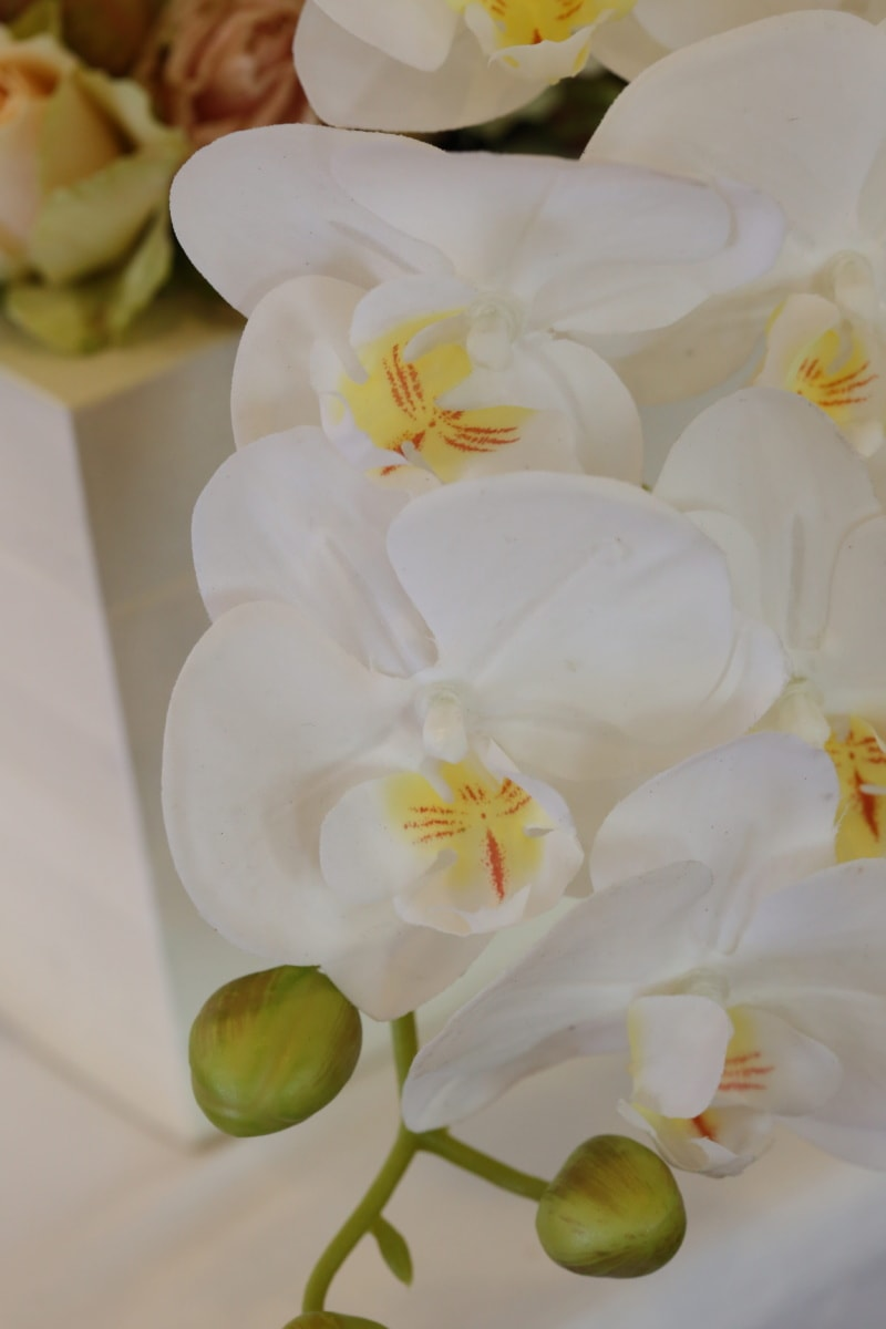 orchid, white flower, pistil, petals, aromatherapy, fragrance, flower, white, flowers, petal