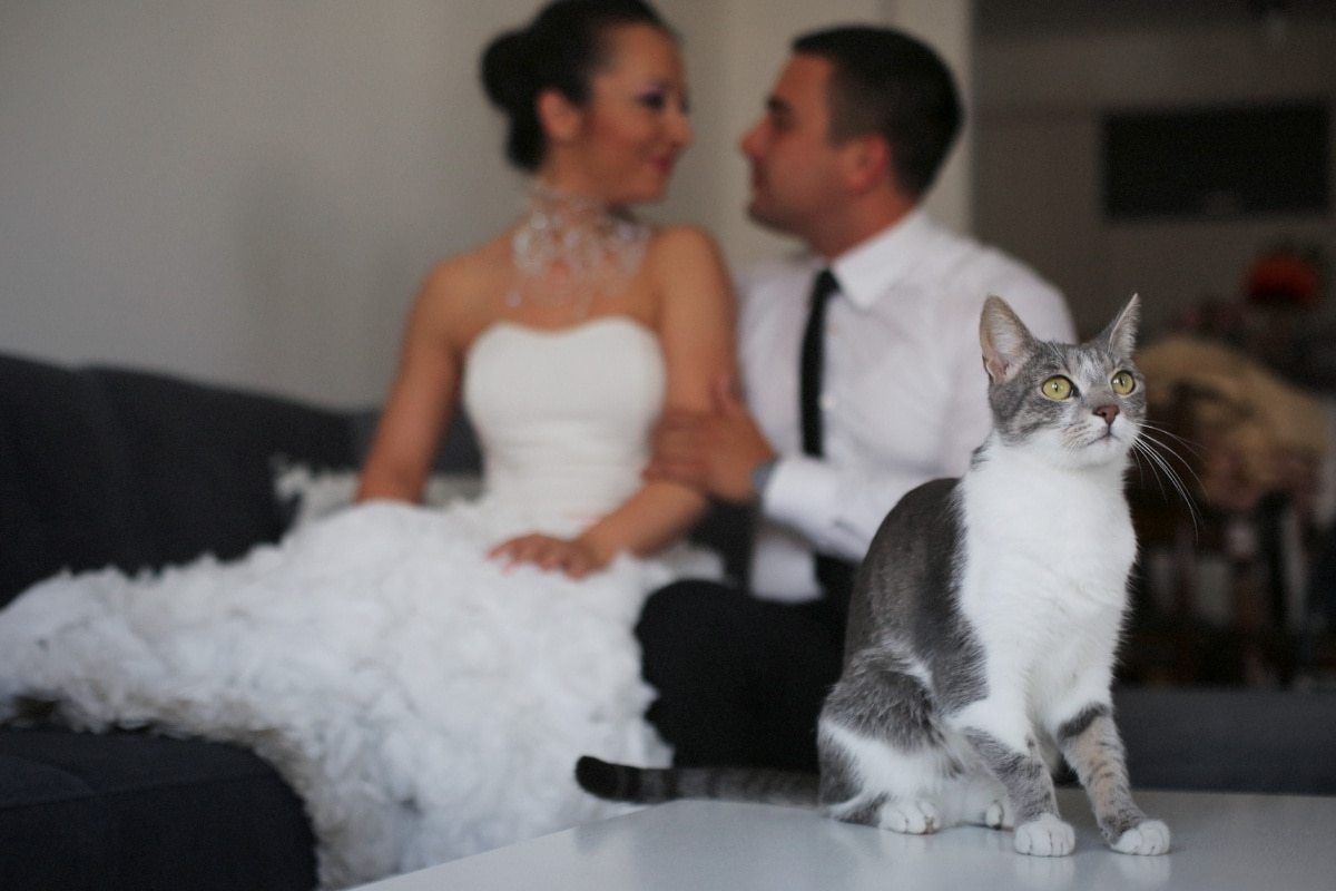 kitty, sitting, living room, bride, groom, cute, love, cat, couple, happiness