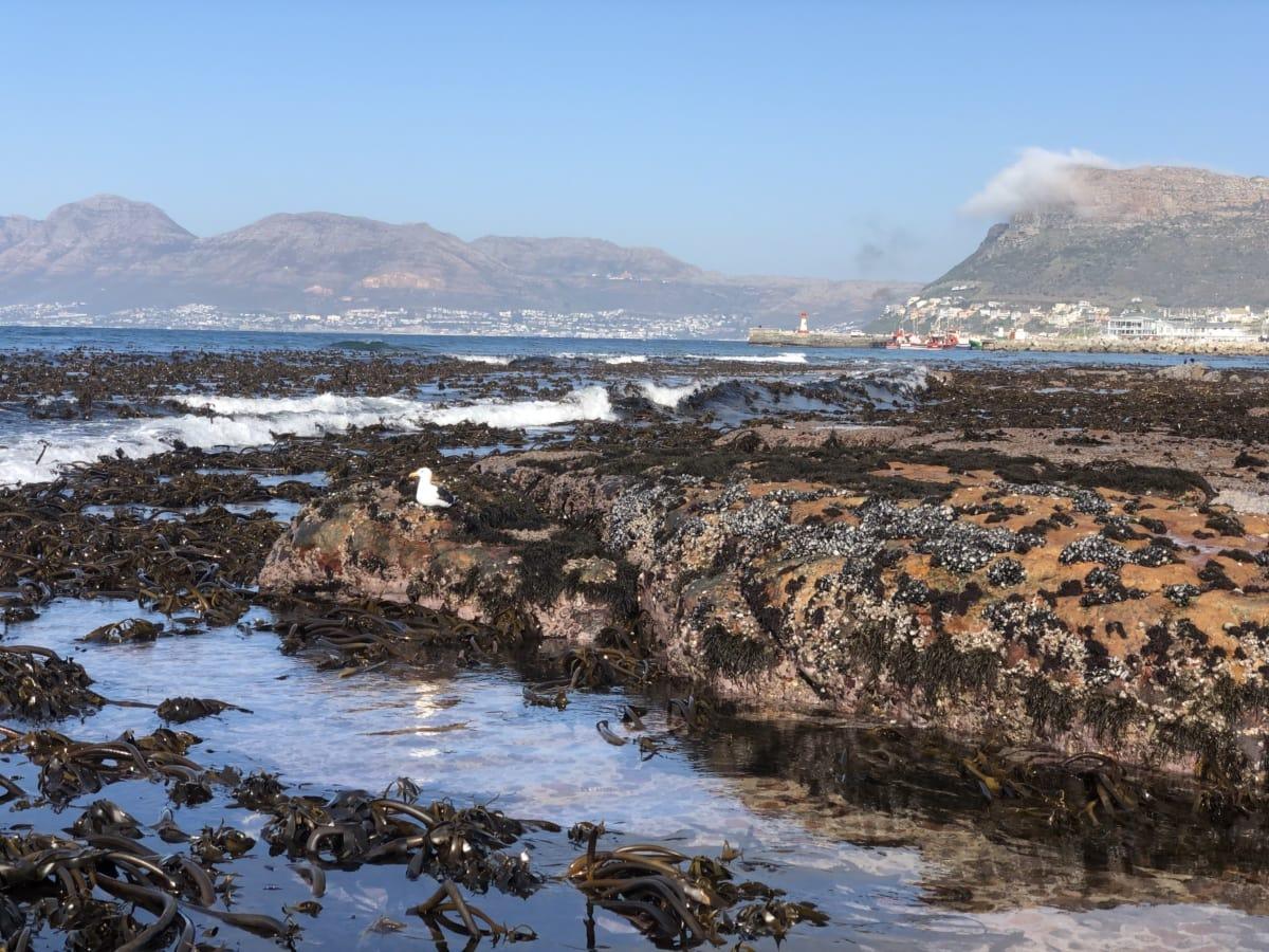 seaweed, tide water, tide, coastline, underwater, beach, landscape, coast, sea, ocean