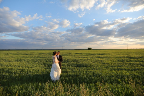 marriage, wheatfield, husband, wife, spring time, photo model, posing, plain, grass, rural