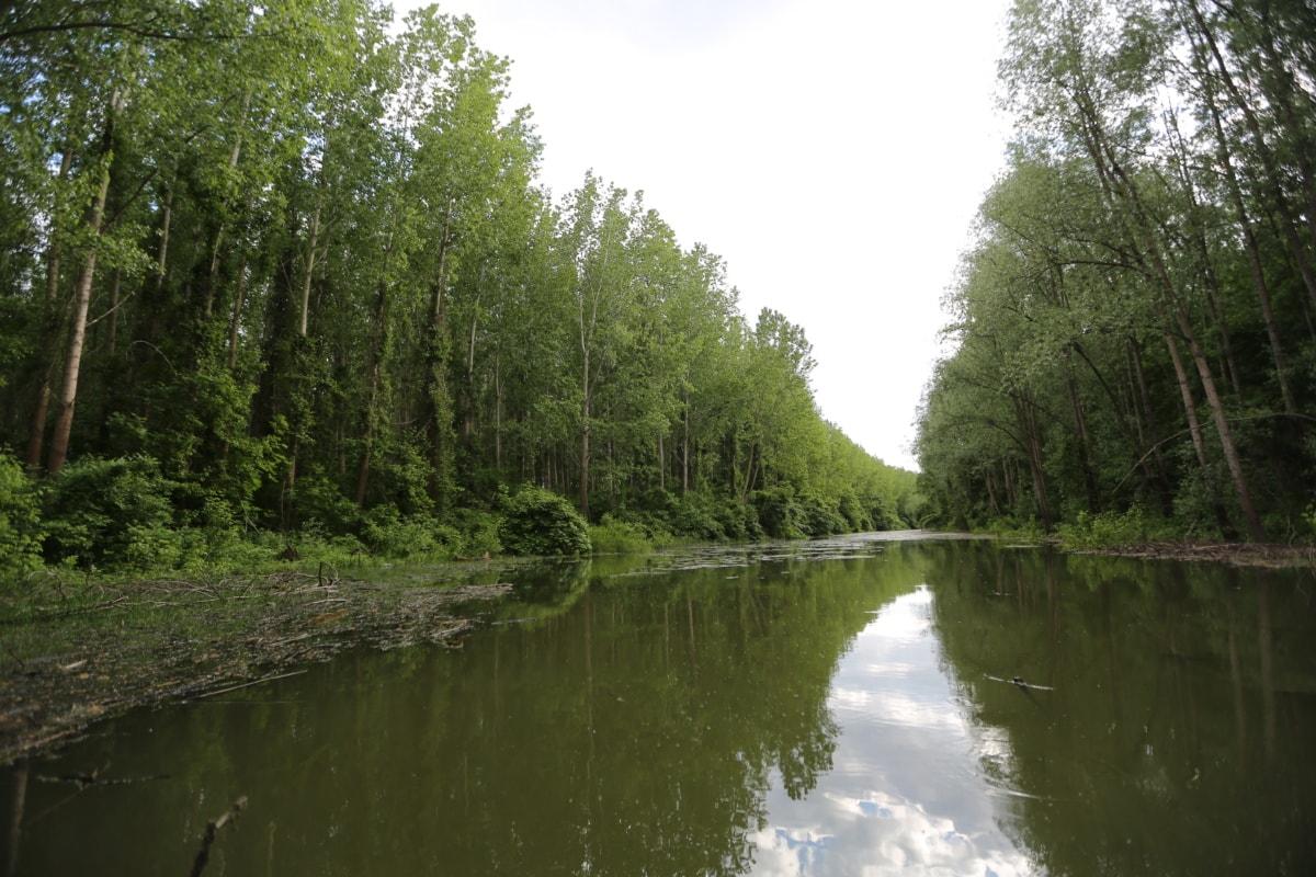 berge, canal, rivière, marais, forêt, zones humides, arbre, terrain, paysage, Lac