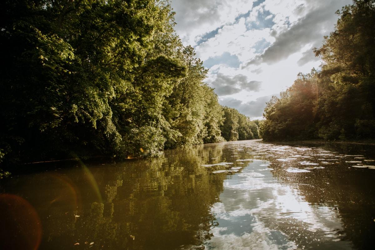 rivière, forêt tropicale, ensoleillement, Amazon, eau, forêt, paysage, arbre, au bord du lac, réflexion