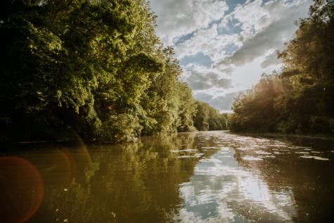 cerah, sinar matahari, sinar matahari, sungai, Danau, hutan, pemandangan, air, pohon, refleksi