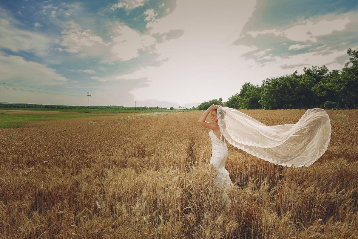 champ de blé, la mariée, robe de mariée, l'été, orge, harvest, céréale, Agriculture, ferme, paysage