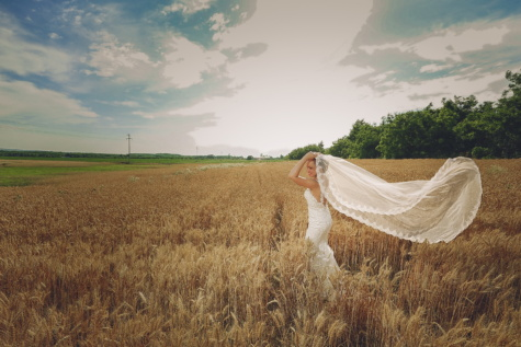 wheatfield, bride, wedding dress, summer season, barley, harvest, cereal, agriculture, farm, landscape