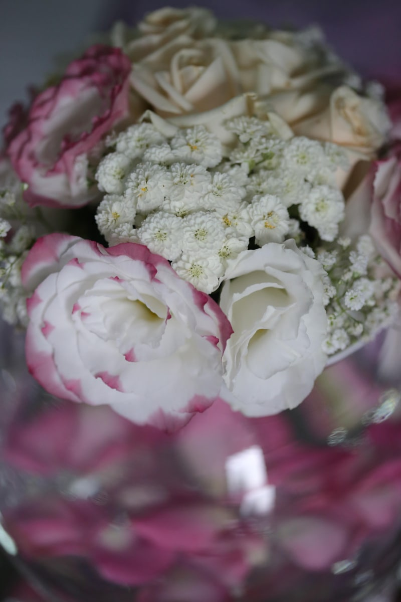 romance, roses, white flower, bouquet, love, flower, rose, pink, beautiful, petal