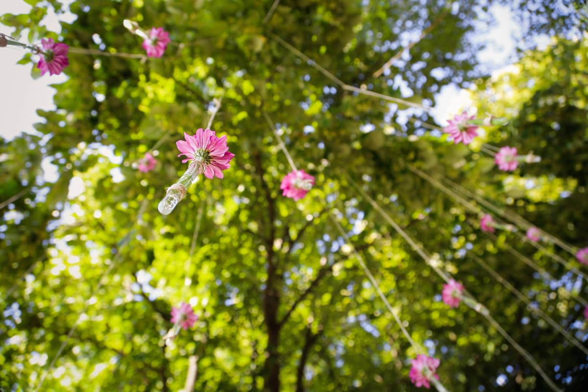 suspendu, fleurs, corde, décoration, printemps, jardin, fleur, fleur, plante, herbe