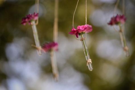 hängande, blommor, rep, stilla liv, dekorativa, ört, köttätande växt, blomma, rosa, blomma